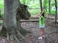 Image for Moose Tree - Moose Tree Nature Preserve - Lake Orion, MI