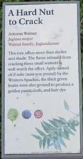 Image for Arizona Walnut, Montezuma Well National Monument - Rimrock, AZ