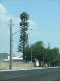 Image for N Simmons St Palm - Las Vegas, NV