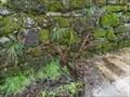 Image for Arado - Loiro, Barbadás, Ourense, Galicia, España