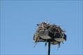Image for Old Walmart Center Osprey-Punta Gorda,FL