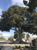 Image for Founder's Park Tree - Anaheim, CA