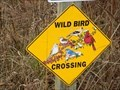 Image for Wild Bird Crossing - near Bonham, TN