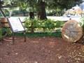 Image for Briones Park Tree Display - Palo Alto, CA