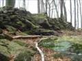 Image for Camp Celtic - Niederbronn les Bains/France