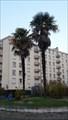 Image for Les palmiers du jardin disparu - La Riche, Centre