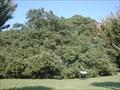 Image for Emancipation Oak, Hampton, VA