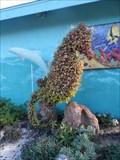Image for Seahorse  -  Encinitas, CA