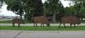 Image for Bison Family ~ Watertown, South Dakota