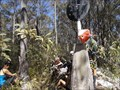 Image for Drain trig, Kunderang Wilderness Area, Werrikimbe, NSW