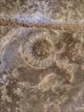 Image for Fossiles de l'Eglise Saint Hilaire de Cramard - Chalandray, Nouvelle Aquitaine, France