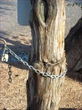 Image for Chain Eating Tree - Payson, Arizona