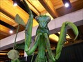 Image for Praying Mantis - Exploration Place - Wichita, KS