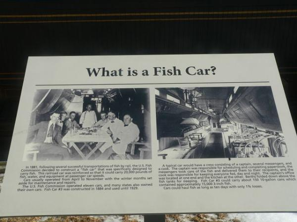 What is a Fish Car