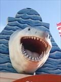 Image for Great White Shark - Basseterre, St. Kitts