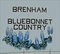 Image for Bluebonnets - Brenham, TX