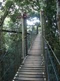 Image for O'Reilly's Tree Top Walk - Canungra, Australia