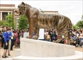 Image for Tom - The University of Memphis' Tiger
