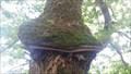 Image for L'arbre de Tuane - Semblançay, Centre