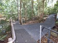 Image for Visitor Centre Boardwalk -  Minnamurra Rainforest, Jamberoo, NSW