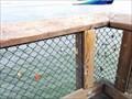 Image for pier 41 - Alcatraz view love locks