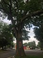 "Image for The ""Shoe Tree""-Belvidere, NJ"