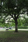 Image for George Washington Tree -- Veteran's Memorial Park, Fort Worth TX
