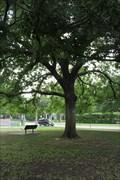 Image for George Washington Tree -- Veteran's Memorial Park, Fort Worth TX