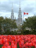 Image for Canadian Tulip Festival - Ottawa, Ontario