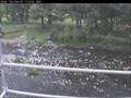 Image for River Greta Cam, Keswick, Cumbria