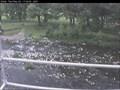 Image for River Greta Cam, Keswick, Cumbria