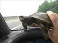 Image for Roanoke Traffic Dodger - Roanoke,IN