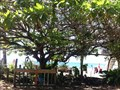 Image for Shoe Tree - Waimea Beach, Oahu, HI