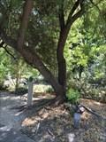 Image for Peggy Diane Wilcox - Walnut Creek, CA