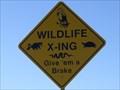 Image for Multiple Species Crossing - Merritt Island National Wildlife Refuge, FL