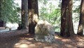 Image for National Tribute Grove - Jedediah State Park, CA