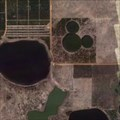 Image for Massive Mickey, Orange Grove, Clearmont, Florida.