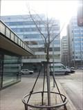 Image for Friedensbaum/Peace Tree - Stuttgart, Germany, BW