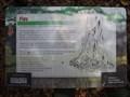 Image for Figs - Kooloonbung Creek walk, Port Macquarie, NSW, Australia