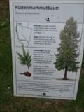 Image for Küstenmammutbaum in der Sequoiafarm - Nettetal-Kaldenkirchen - NRW - Germany