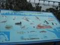 Image for San Diego Bay Fauna  -  Coronado, CA