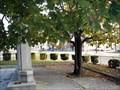 Image for Calvin Coolidge Tree - Camden, NJ