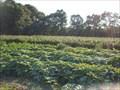 Image for Durocher Farm North Raspberries  -  Litchfield, NH