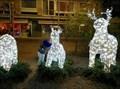 Image for Reindeer X-mas- Knokke (B)