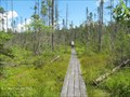 Image for Peacham Bog Boardwalk - Groton Woods State Forest - Peacham, VT