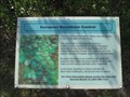 Image for European Buckthorn Control