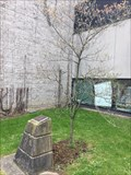 Image for Dr. James A. Gibson Tree - St. Catharines, ON