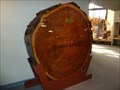Image for Tree Ring Display - New Mexico Museum of Natural History - Albuquerque, NM