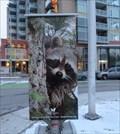 Image for Raccoon - Ottawa, Ontario