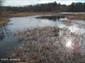 Image for The Nature Trail and Cranberry Bog, Patriot Place - Foxborough, MA